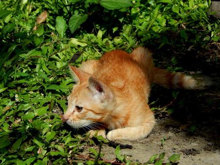 gato jugando: Cat jugando