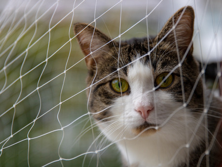 Curious cute cat with green eyes behind a safety net looking to the cam