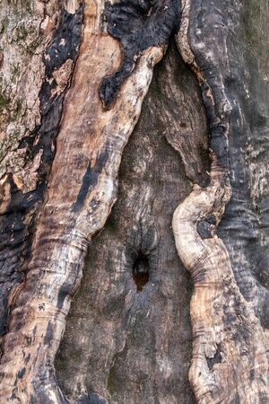 A nice weathered bark of a tree - closeup pattern Reklamní fotografie