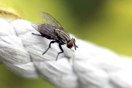 Mucha makro Zdjęcie Seryjne