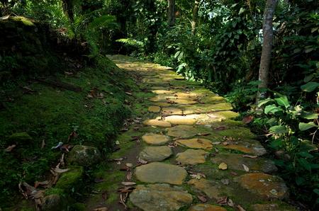 marta: Stone paths leading to Ciudad Perdida (Lost City) in Colombia Stock Photo