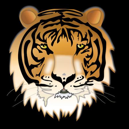 siberian tiger: Wild thing. Siberian tiger.