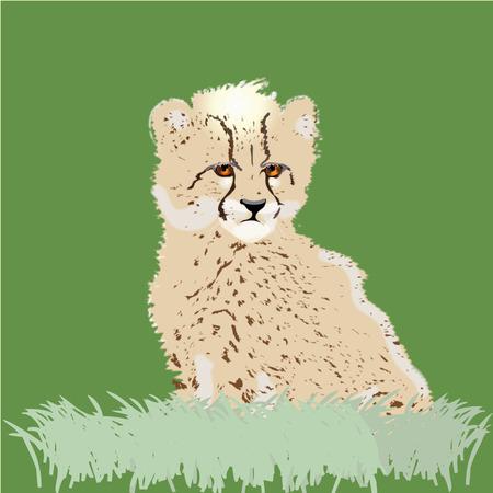 Bébé Cheetah  Banque d'images - 6913152