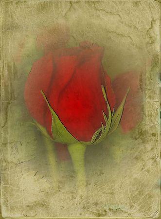 Rose on grunge ancient frame photo