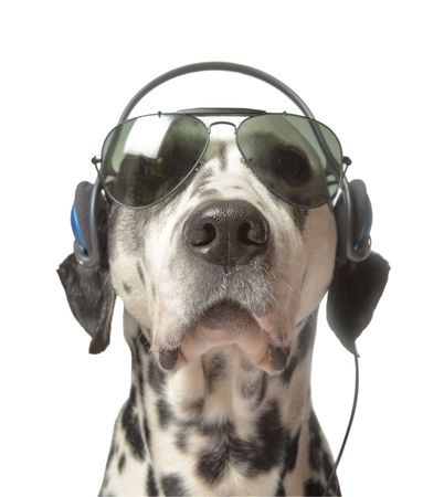 Cool Movie Director, acting dog Stock Photo