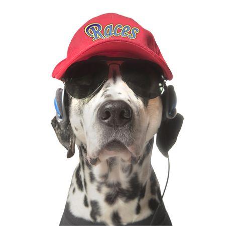 perros vestidos: Palabra de dal, carreras de carrerases ficticio, creado digitalmente por m�.