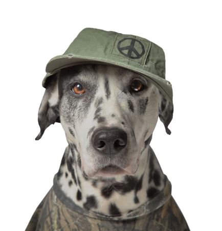 dalmatier: Groene vrede activist, dieren rechten activisten, protesteerder  Stockfoto