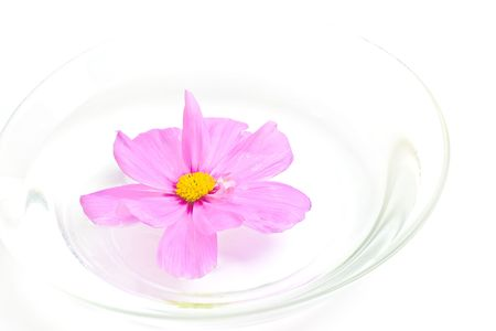 pestil: wild pink flower in water