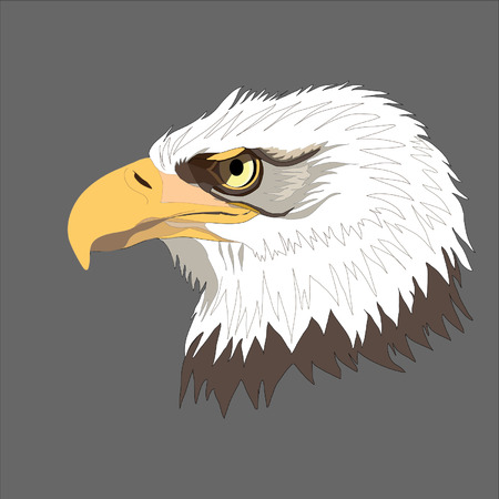 bald head: Eagle. Bald eagle. Illustration