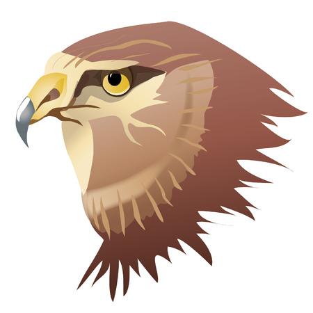 head wise: Hawk. Harrier hawk.