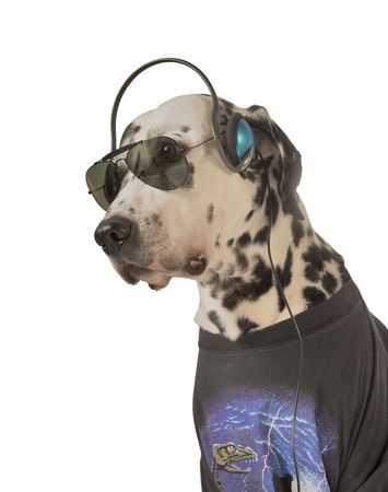 Rocker, acting Dal. My Dalmatian. Stock Photo - 7005146
