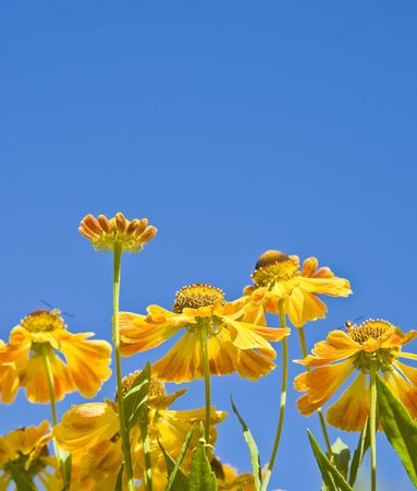 additions: Garden flowers on blue sky with copy space for your text, additions