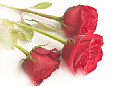 Roses. three red roses, high resolution