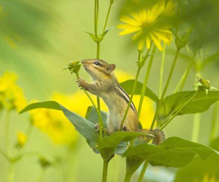 ardilla: Ardilla. Poco amante de la naturaleza.