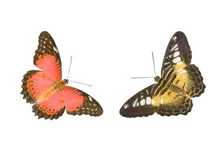 chrysope: Papillon. Chrysopes et Clipper