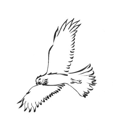 Harrier hawk , simplified brush drawing.