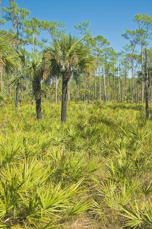Corkscrew swamp Stock fotó