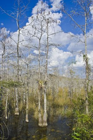 cypress swamps photo