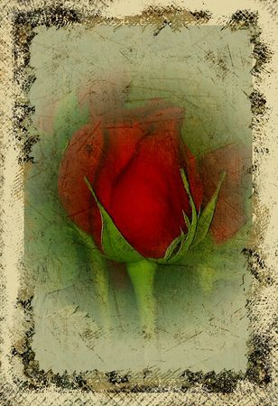 Grungy red rose