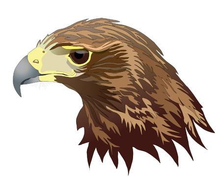 raptors: Harris Hawk head Illustration