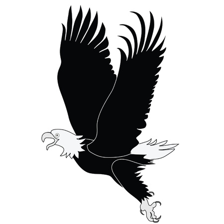 иллюстрация: Bald Eagle in flight black and white illustration. Latin name - Haliaeetus leococephalus Иллюстрация