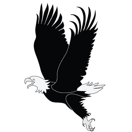 Bald Eagle tijdens de vlucht zwart-wit illustratie. Latijnse naam - Haliaeetus leococephalus Stockfoto - 9880055