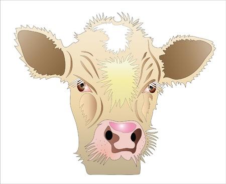Beige calf head illustration. Cartoon.  Illustration