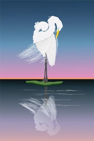 Graceful Great egret grooming at sunrise. Ilustrace