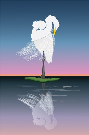 egret: Graceful Great egret grooming at sunrise. Illustration