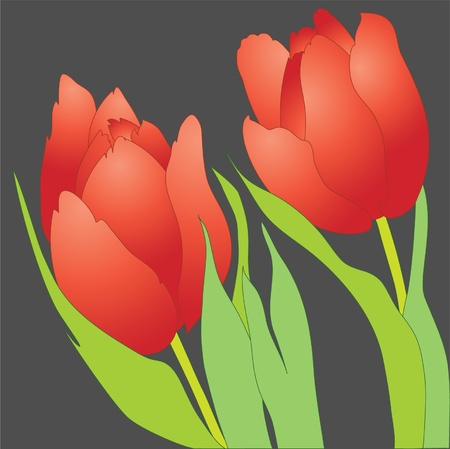 Pair of red tulips on grey  Illustration
