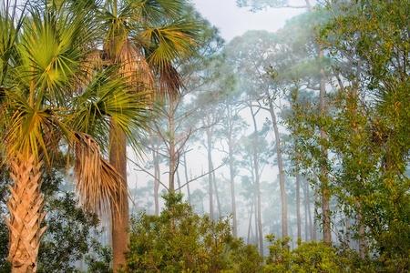 floridian: Corkscrew Swamp Sanctuary, Florida