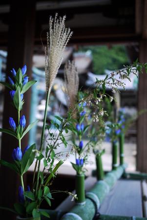 gentian flower: Japanese flower arrangement