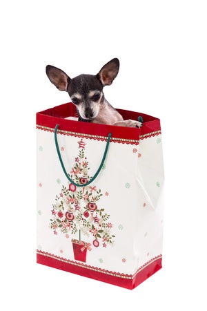 puppy in gift bag  Christmas gift-white background photo