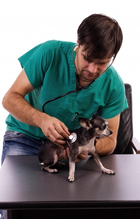 Vet examining a chihuahua dog with a stethoscope isolated on white background photo
