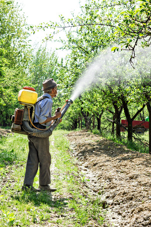 Old farmer spraying the trees with chemicals  photo