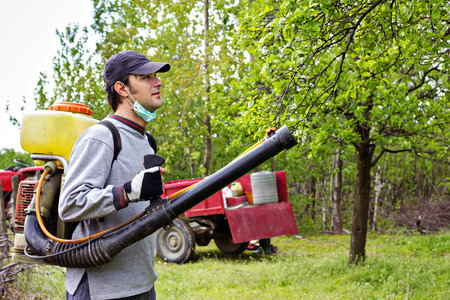 fungicide: Young farmer spraying the trees with chemicals in orchard