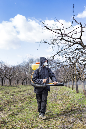 young farmer: Young farmer spraying the trees with chemicals in the orchard