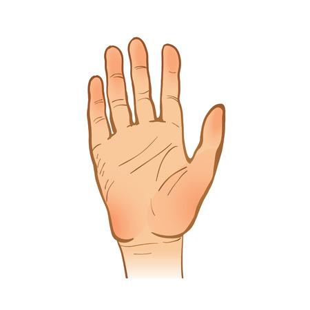 手線スケッチ。1 つの手です。開いたやし。停止または歓迎のジェスチャーです。塗装の腕。ベクトル イラスト。コレクションの一部は、あなたの