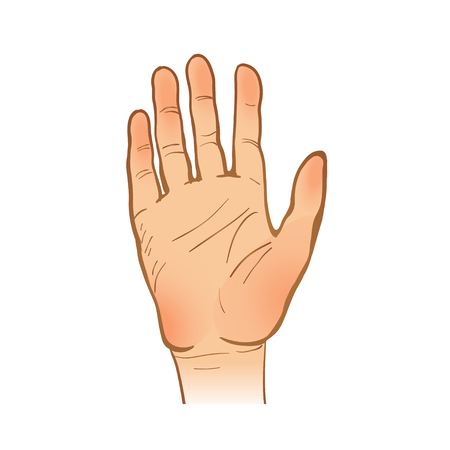 stopping: hand  line sketch. one hand. opened palm. stopping or welcome gesture. painted arm. vector illustration. part of collection, good for your design!