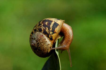 acrobatic snail Banco de Imagens