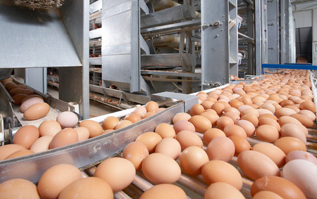 food plant: egg farm Stock Photo