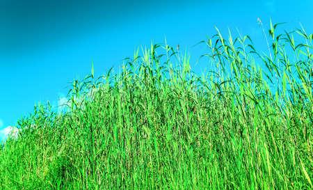 groene grassen onder de blauwe lucht