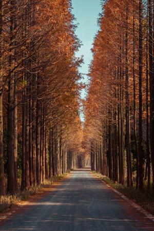 redwoods along the road Foto de archivo