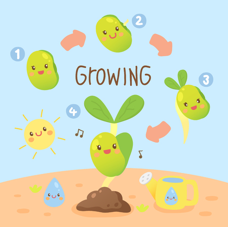 bean sprouts: bean sprouts growing