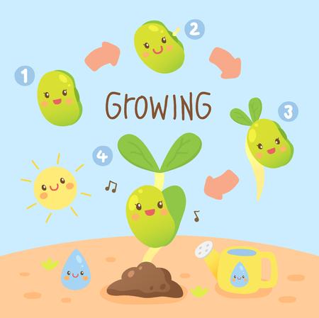 brotes de soja creciendo