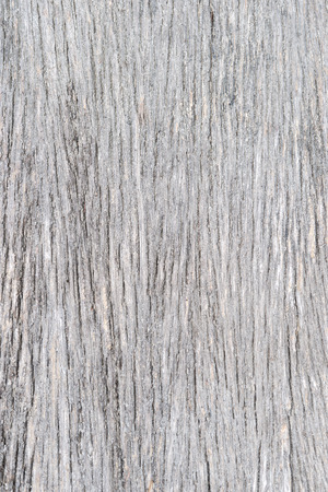 wooden partition: Wood Texture 01
