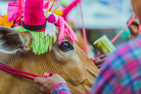 Villagers decorate the cow for the Songkran festival in Kanchanaburi , Thailand.