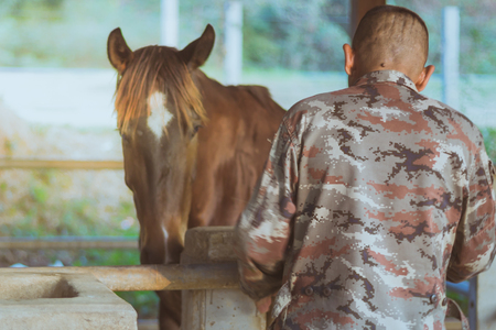 The old trainer  take care of his horse after being trained in a riding school. Focus on man.
