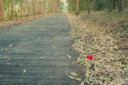 A little red heart pillow falls on the dry leaf pile on the road. Reklamní fotografie