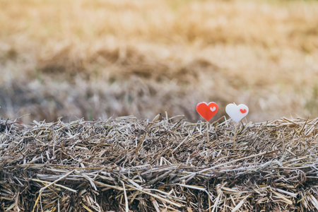 Two little heart candles on rice straw in paddy field.